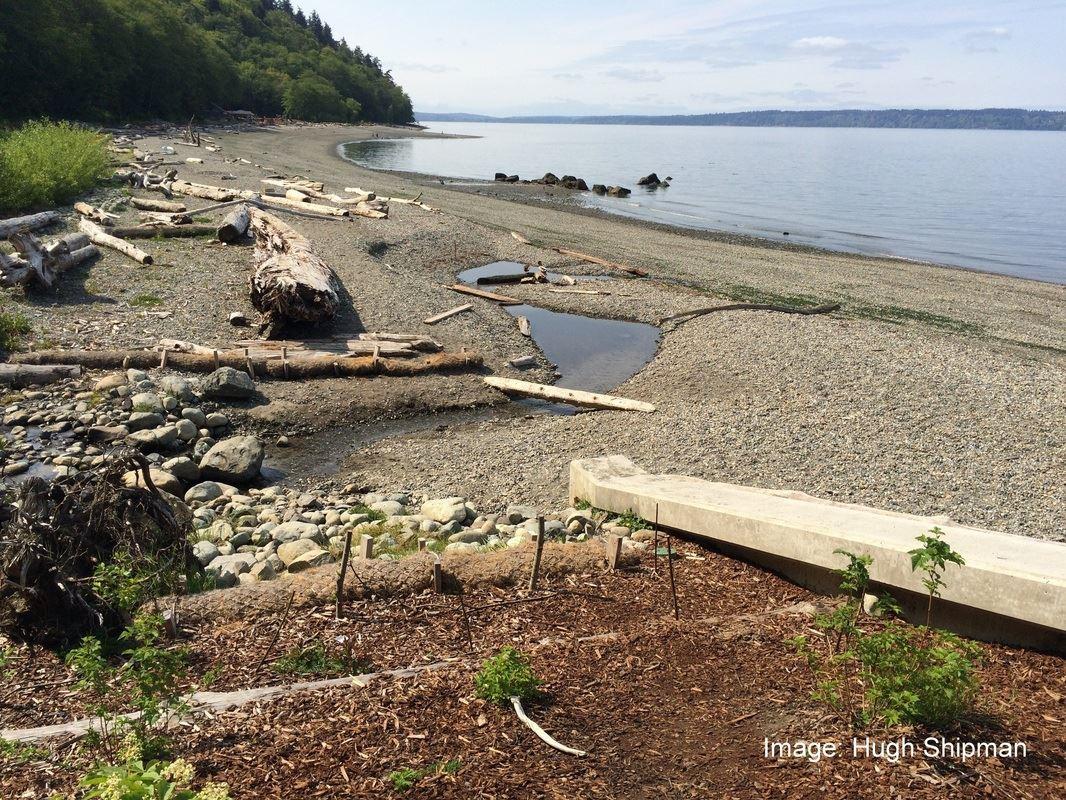 Driftwood logs and upland vegetation help stabilize this beach.