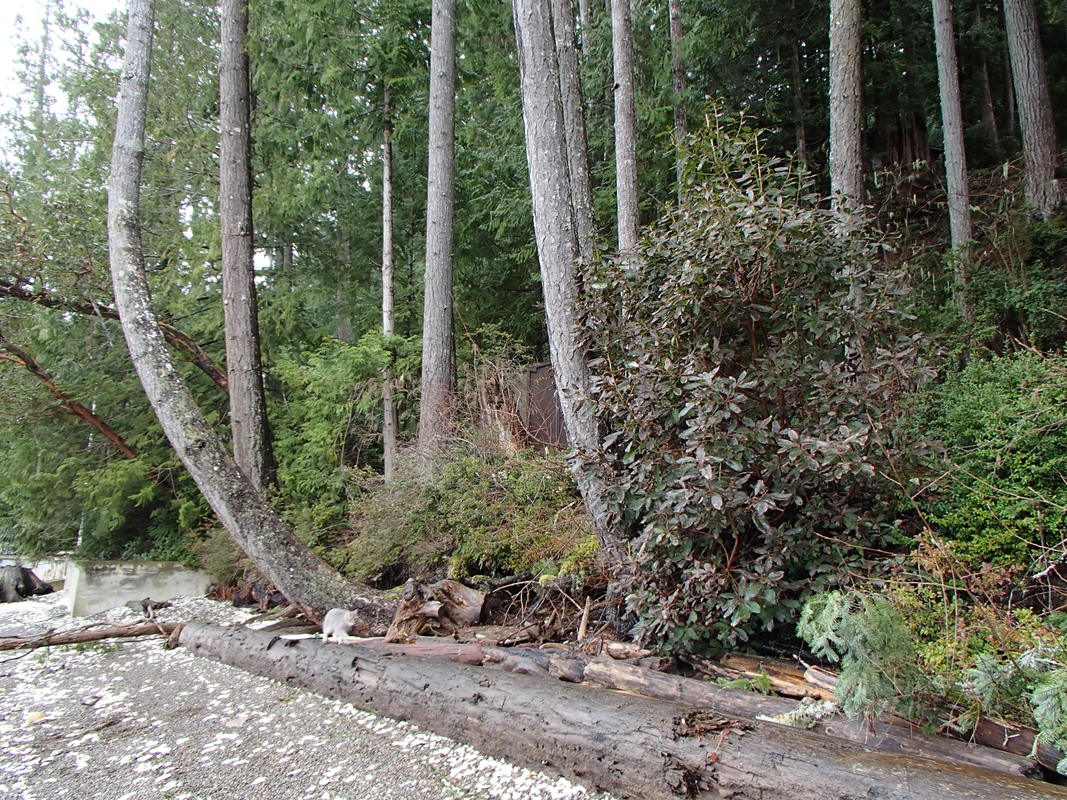 Downed trees often provide natural shoreline protection from wave-based erosion. Logs also help beac