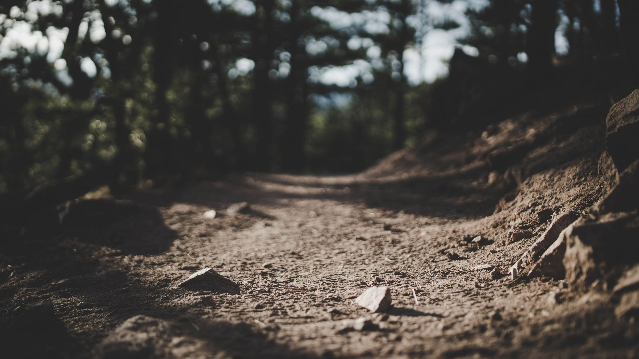 Photo by Trevor Brown on Unsplash - A dirt trail in a conifer forest