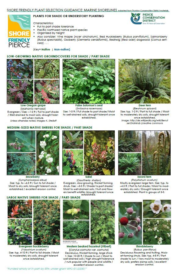 Plants for Shade or Understory Planting