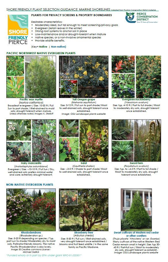 Plants for Privacy Screens