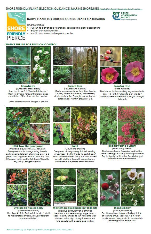 Native Plants for Erosion Control